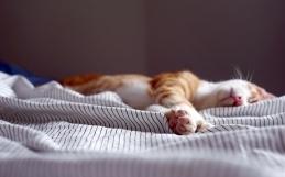 El enigma de las bellas durmientes